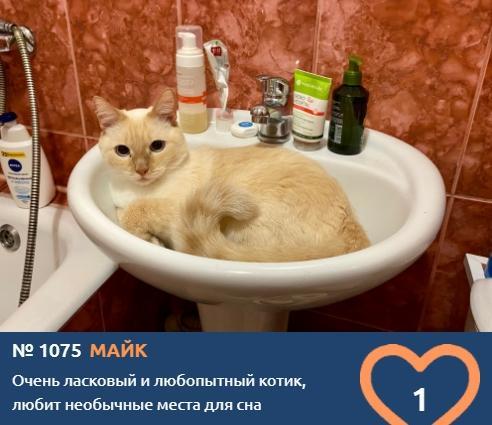 фото Любопытные проказники: публикуем фото конкурсантов проекта «Главный котик Новосибирска» в самых неожиданных местах 6