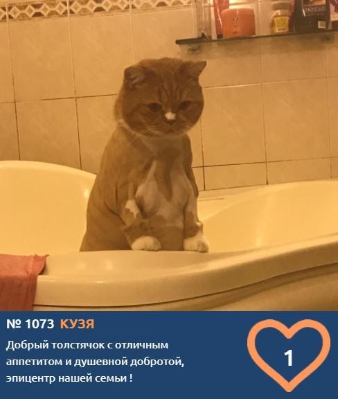 фото Любопытные проказники: публикуем фото конкурсантов проекта «Главный котик Новосибирска» в самых неожиданных местах 8