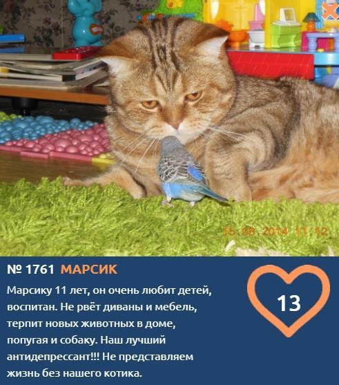 Фото Что чувствуют кошки: публикуем самые эмоциональные фото участников проекта «Главный котик Томска» 6