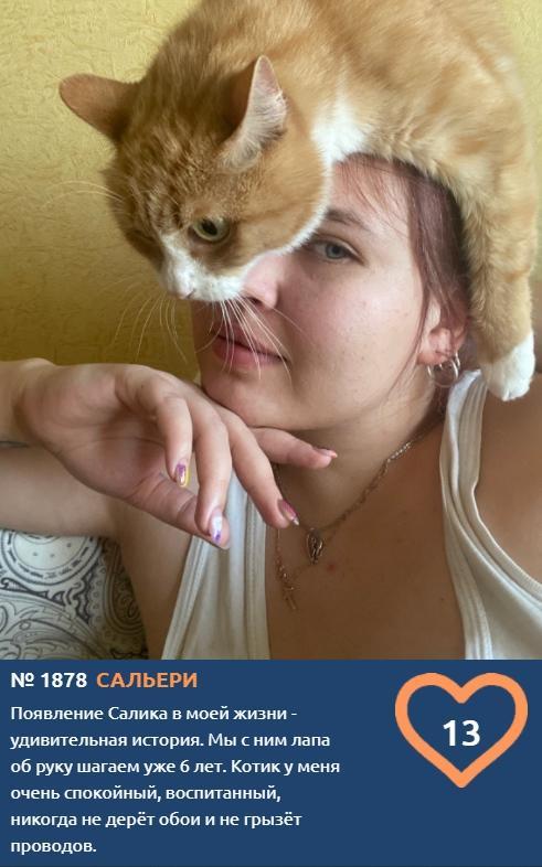 Фото Что чувствуют кошки: публикуем самые эмоциональные фото участников проекта «Главный котик Томска» 8