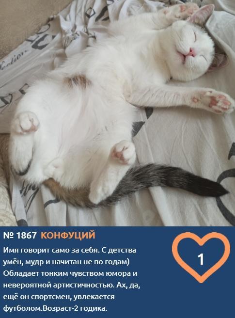 Фото Что чувствуют кошки: публикуем самые эмоциональные фото участников проекта «Главный котик Томска» 10