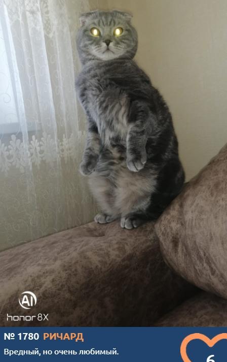 Фото Что чувствуют кошки: публикуем самые эмоциональные фото участников проекта «Главный котик Томска» 11