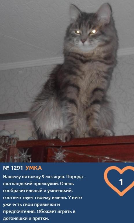Фото Что чувствуют кошки: публикуем самые эмоциональные фото участников проекта «Главный котик Томска» 15