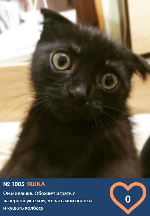 Фото Что чувствуют кошки: публикуем самые эмоциональные фото участников проекта «Главный котик Томска» 16