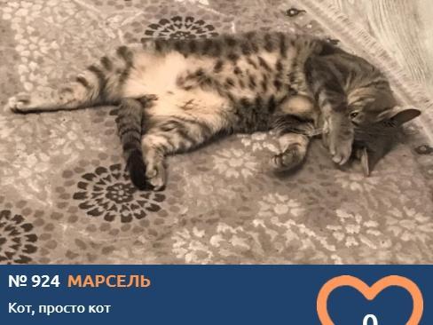 Фото Что чувствуют кошки: публикуем самые эмоциональные фото участников проекта «Главный котик Томска» 18