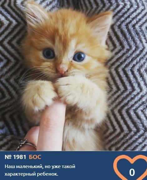 фото Пушистые комочки счастья: знакомимся с самыми юными участниками конкурса «Главный котик Новосибирска» 2