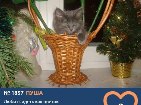 фото Пушистые комочки счастья: знакомимся с самыми юными участниками конкурса «Главный котик Новосибирска» 4
