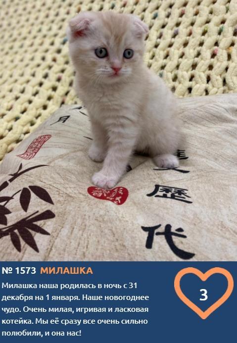 фото Пушистые комочки счастья: знакомимся с самыми юными участниками конкурса «Главный котик Новосибирска» 7