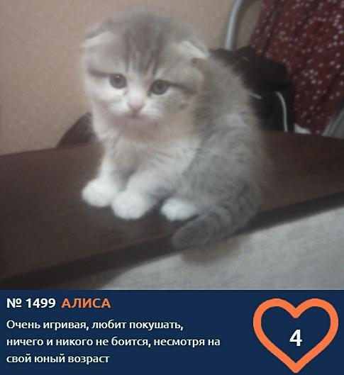 фото Пушистые комочки счастья: знакомимся с самыми юными участниками конкурса «Главный котик Новосибирска» 8