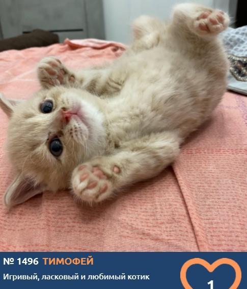 фото Пушистые комочки счастья: знакомимся с самыми юными участниками конкурса «Главный котик Новосибирска» 9