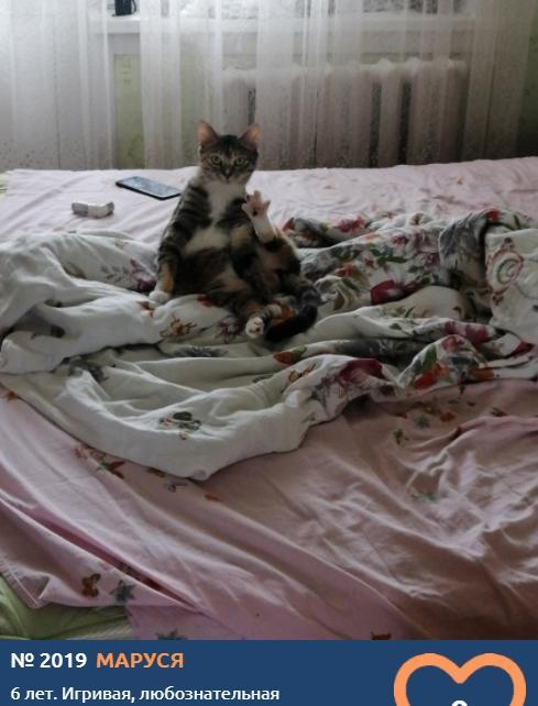 фото Котонянька, гимнастка, рыбак, водитель и меломан: чем занимаются участники конкурса «Главный котик Новосибирска» 5