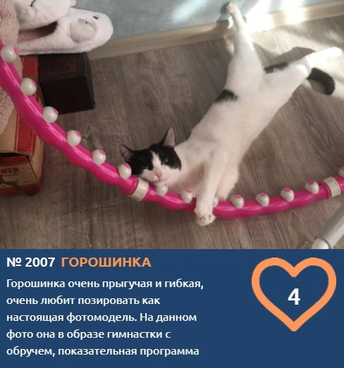 фото Котонянька, гимнастка, рыбак, водитель и меломан: чем занимаются участники конкурса «Главный котик Новосибирска» 9