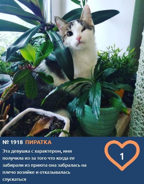 фото Котонянька, гимнастка, рыбак, водитель и меломан: чем занимаются участники конкурса «Главный котик Новосибирска» 6