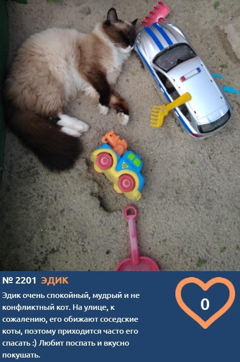 фото Жизнь в кукольном домике, игры в песочнице и пенная ванна: публикуем самые забавные фотоснимки участников конкурса «Главный котик Новосибирска» 7
