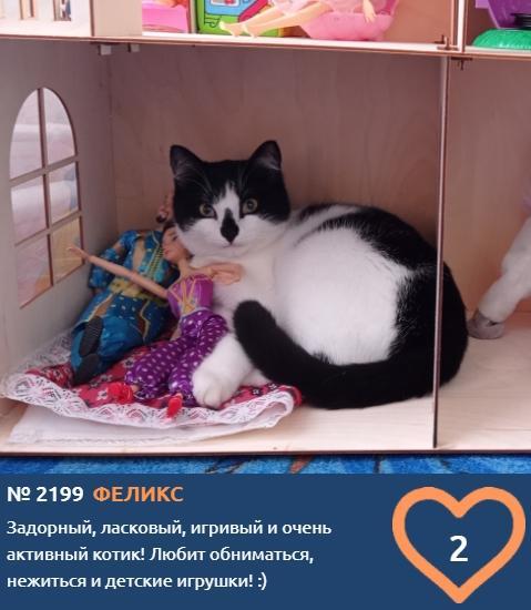 фото Жизнь в кукольном домике, игры в песочнице и пенная ванна: публикуем самые забавные фотоснимки участников конкурса «Главный котик Новосибирска» 8
