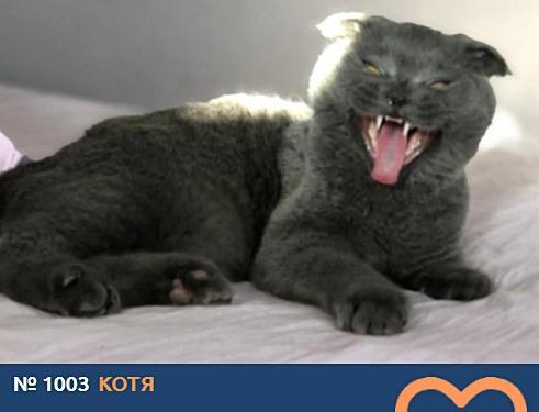 фото Говорящие коты и кошки: забавные фото участников конкурса «Главный котик Омска» 6