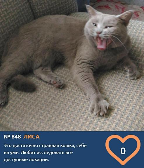 фото Говорящие коты и кошки: забавные фото участников конкурса «Главный котик Омска» 2
