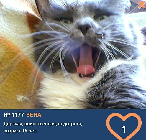 фото Говорящие коты и кошки: забавные фото участников конкурса «Главный котик Омска» 3