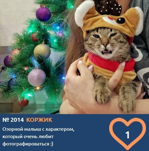 фото Говорящие коты и кошки: забавные фото участников конкурса «Главный котик Омска» 4