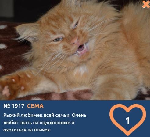 фото Говорящие коты и кошки: забавные фото участников конкурса «Главный котик Омска» 8