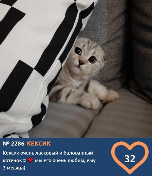 фото Вляпались по самые уши: публикуем смешные фото шкодливых участников конкурса «Главный котик Новосибирска» 4