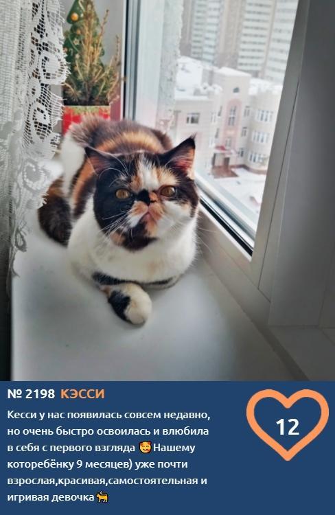 фото Вляпались по самые уши: публикуем смешные фото шкодливых участников конкурса «Главный котик Новосибирска» 5