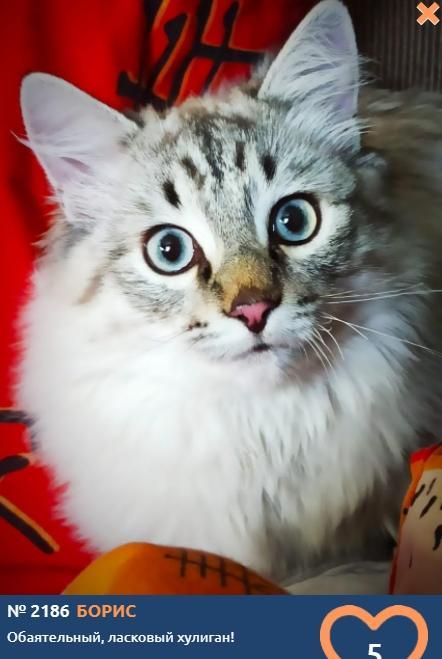 фото Вляпались по самые уши: публикуем смешные фото шкодливых участников конкурса «Главный котик Новосибирска» 6