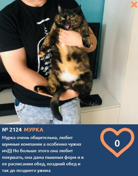 фото Вляпались по самые уши: публикуем смешные фото шкодливых участников конкурса «Главный котик Новосибирска» 9