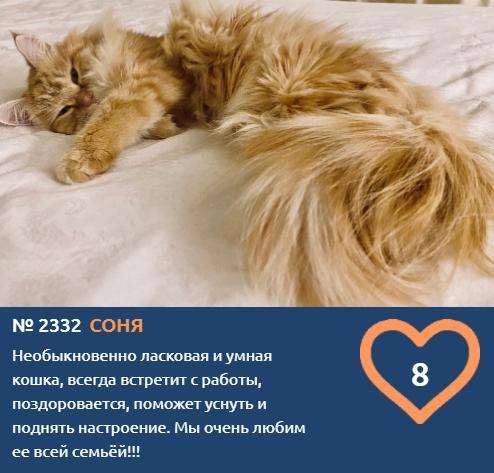 фото К счастью и деньгам: публикуем 10 умилительных фото участников конкурса «Главный котик Новосибирска» и рассказываем, откуда взялся тренд на рыжиков 3