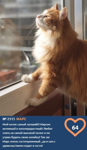 фото К счастью и деньгам: публикуем 10 умилительных фото участников конкурса «Главный котик Новосибирска» и рассказываем, откуда взялся тренд на рыжиков 4