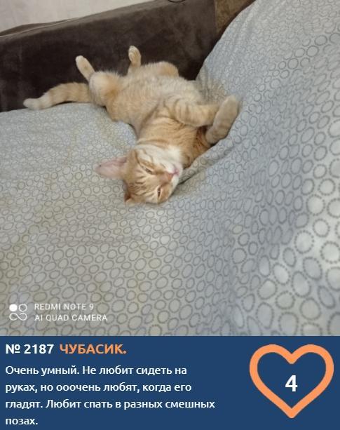 фото К счастью и деньгам: публикуем 10 умилительных фото участников конкурса «Главный котик Новосибирска» и рассказываем, откуда взялся тренд на рыжиков 7