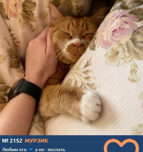 фото К счастью и деньгам: публикуем 10 умилительных фото участников конкурса «Главный котик Новосибирска» и рассказываем, откуда взялся тренд на рыжиков 9
