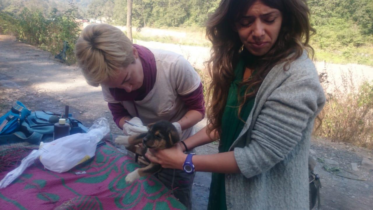фото «Ад, на который психически здоровый человек не сможет смотреть»: зачем новосибирцы спасают бродячих собак в Абхазии и Индии 8