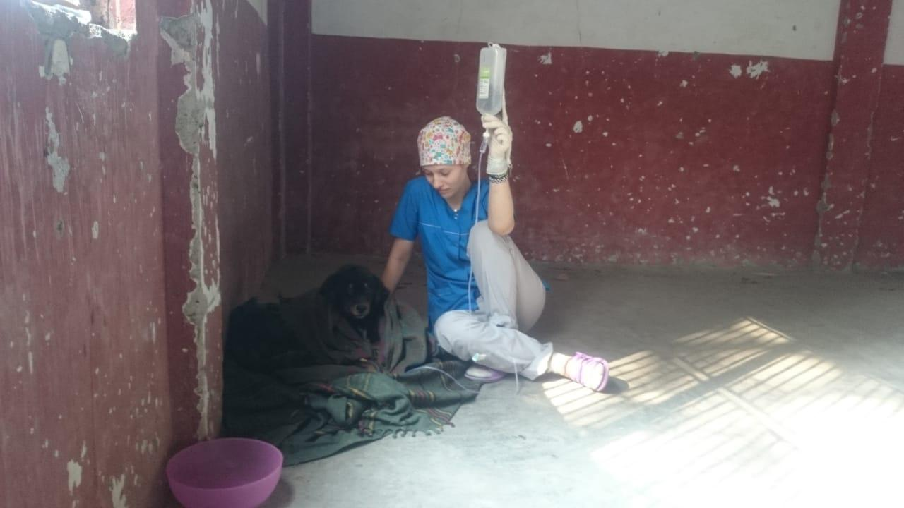 фото «Ад, на который психически здоровый человек не сможет смотреть»: зачем новосибирцы спасают бродячих собак в Абхазии и Индии 6