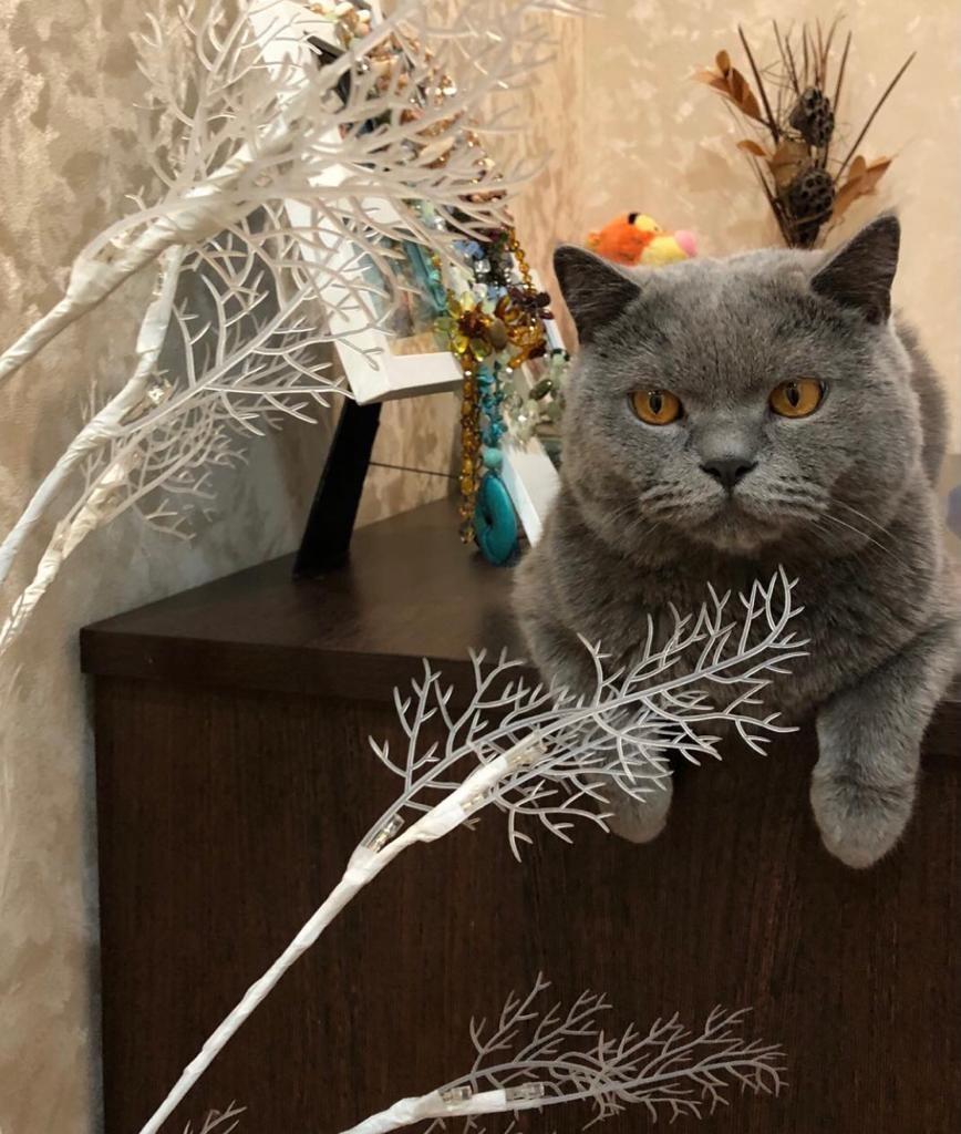 фото Дружба со спаниелем и кроликом: финалист конкурса «Главный котик Новосибирска» Грей оказался выходцем из большой семьи 3