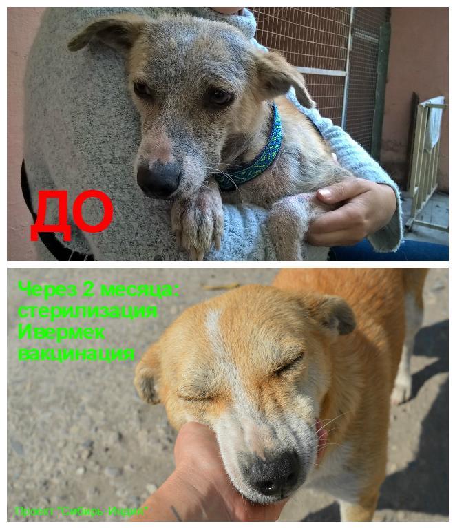 фото «Ад, на который психически здоровый человек не сможет смотреть»: зачем новосибирцы спасают бродячих собак в Абхазии и Индии 12