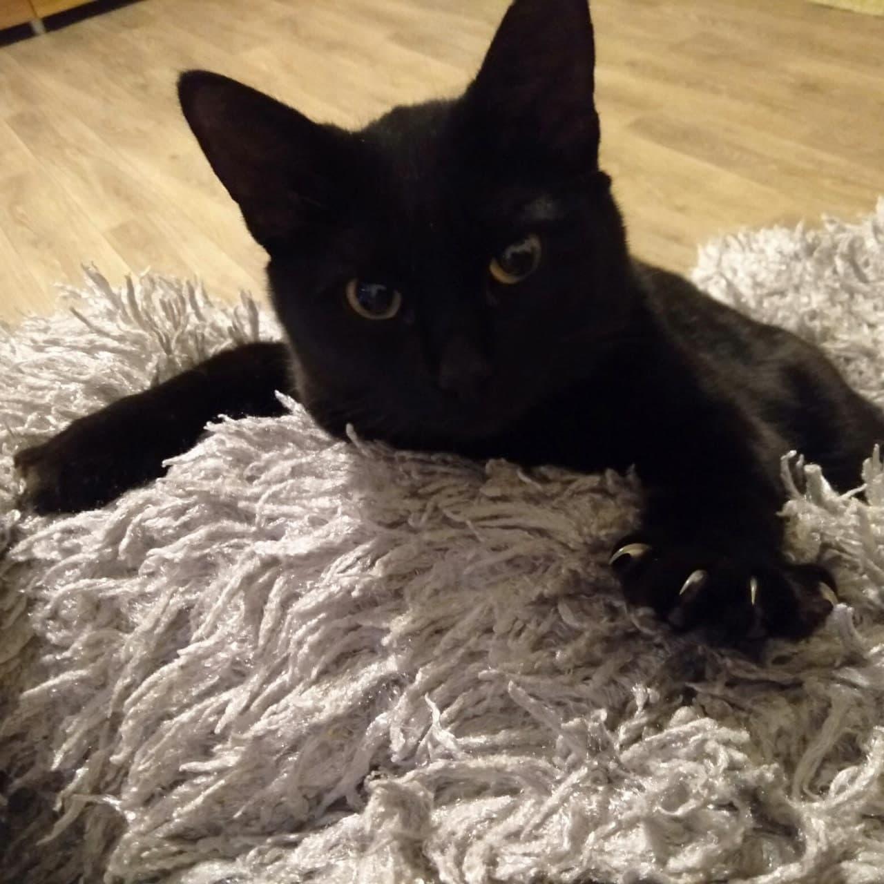 фото Тимофей показывает язык, а Мася – когти: любуемся на самых очаровательных участников конкурса «Главный котик Омска – 2021» 3