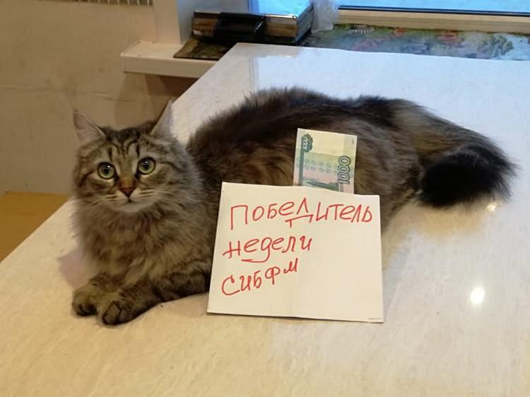 фото Как победить в конкурсе «Главный котик – 2021»: первые финалисты поделились лайфхаками 7