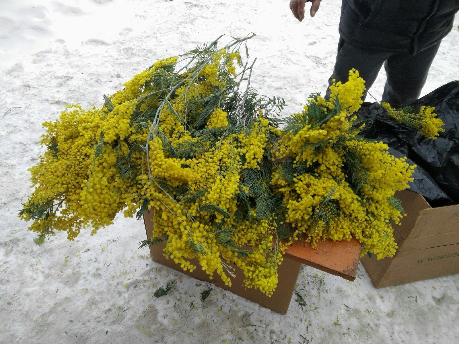фото Цветы к 8 Марта в Новосибирске: улицы завалены душистыми растениями (и это не тюльпаны) 2