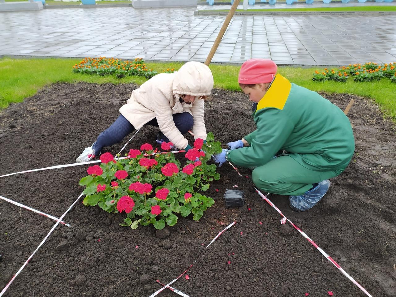Фото В Новосибирске начали высаживать цветы на клумбах 3