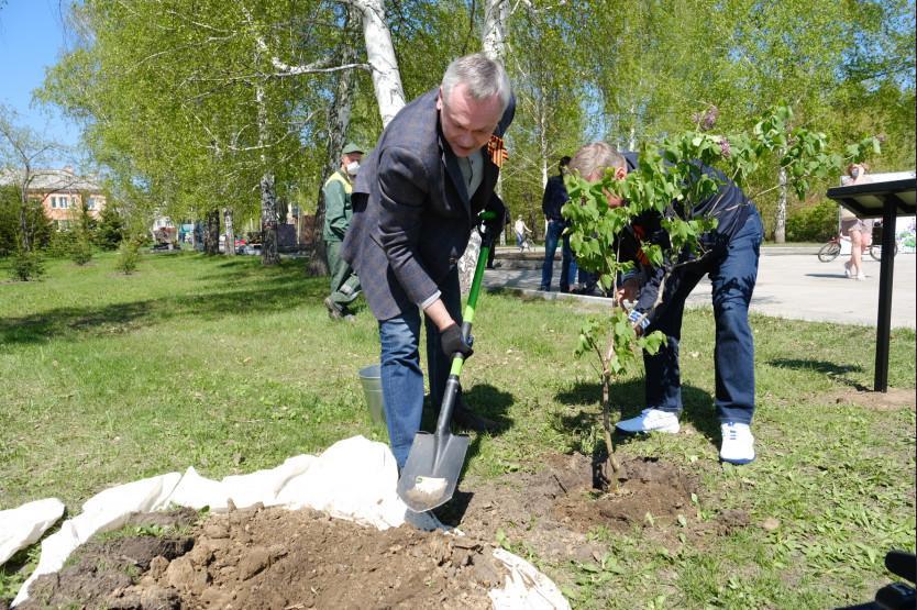 Фото Травников и Локоть посадили сирень в «Саду памяти» 3