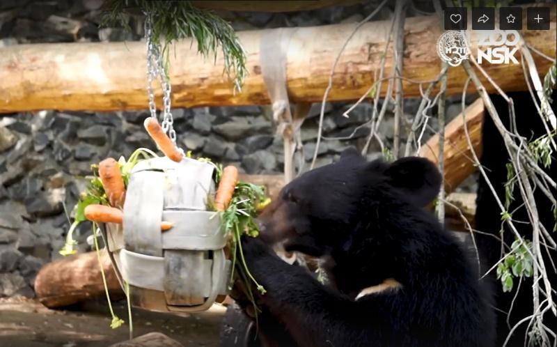 фото Новосибирский зоопарк отметил День медведя онлайн 2