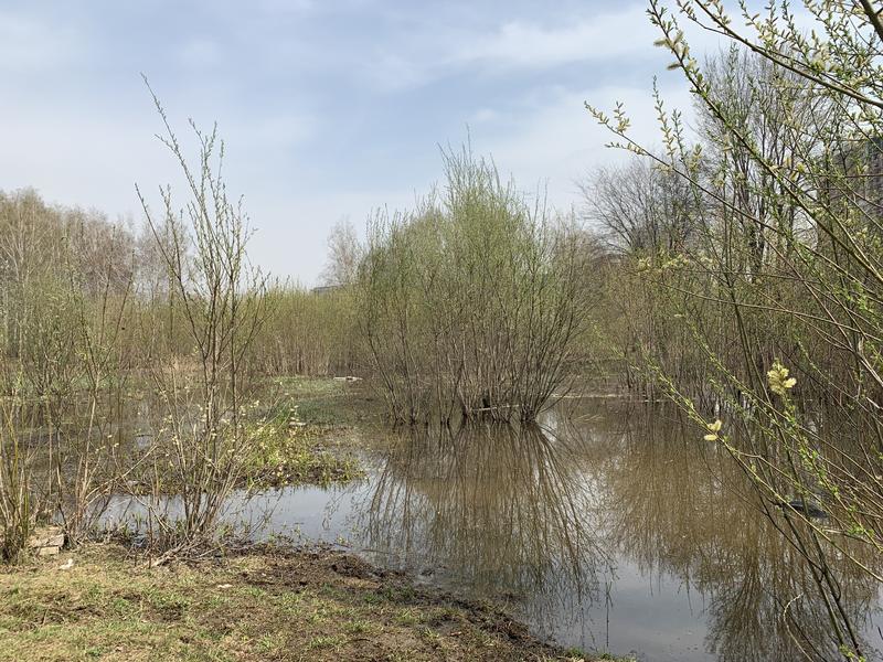 Фото В Новосибирске обустроят пойму реки Каменки 2