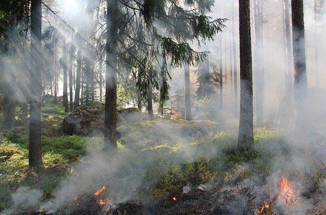 Фото В Новосибирской области нарушителей пожарной безопасности оштрафовали на 860 тысяч рублей 2