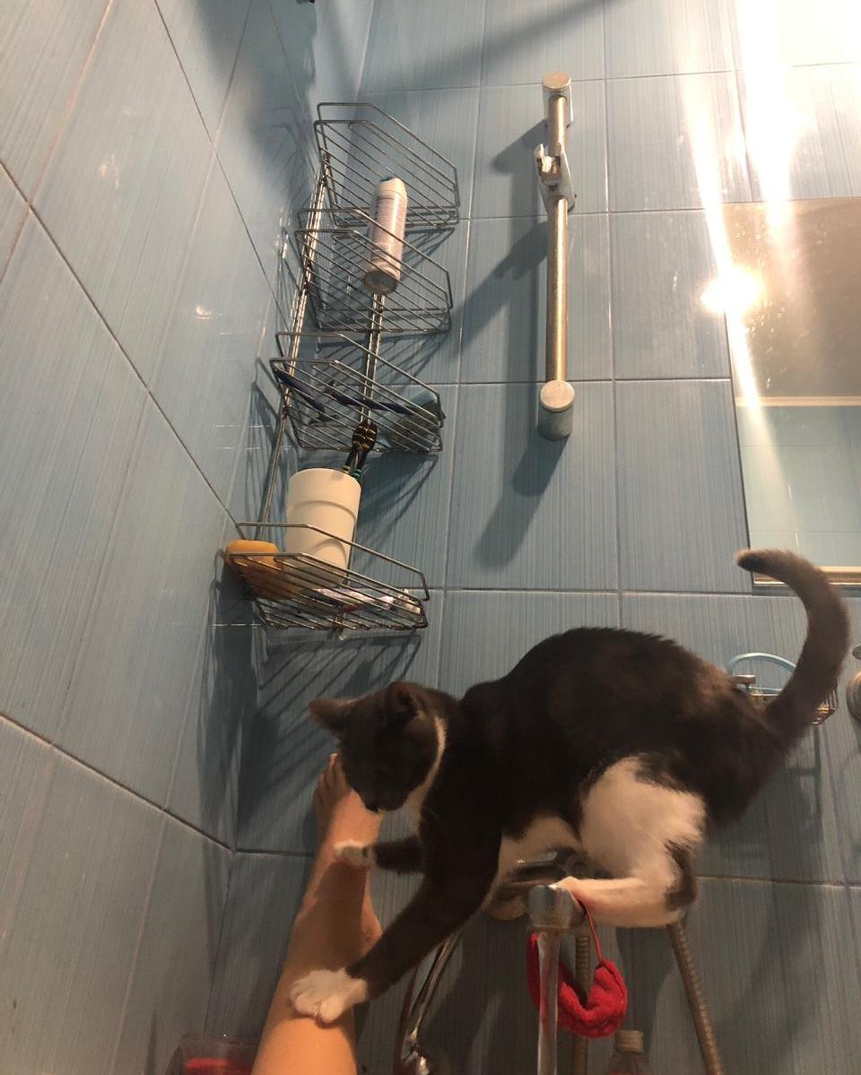 Фото «Сам ко мне пришёл и остался»: как десятый «Главный котик Томска» охраняет свою хозяйку и служит ей живым антистрессом 8