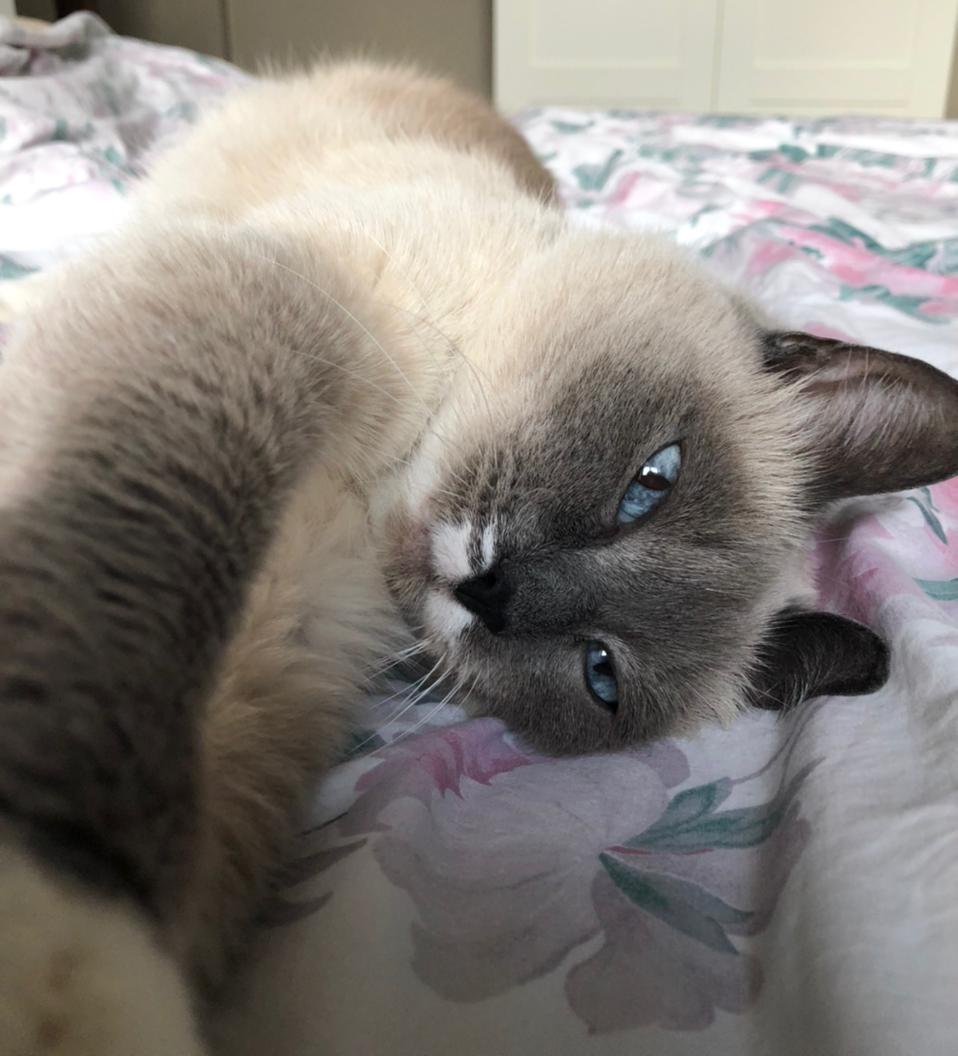 фото Блог в Instagram и татуировка с её изображением: как финалистка конкурса «Главный котик Новосибирска-2021» Шакира покоряет сердца фанатов 3
