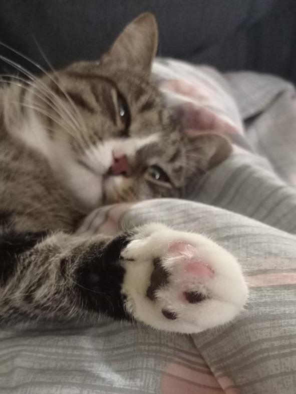 фото «Пятеро по лавкам – это счастье»: десятый «Главный котик Омска» Жорик стремится победить ради своей большой кошачьей семьи 5
