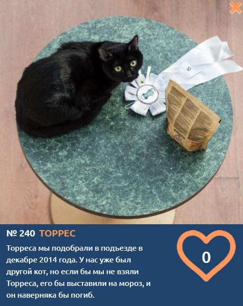 Фото Торреса спасли от верной смерти в ледяном подъезде, и теперь он борется за звание «Главного котика Томска-2021» 2