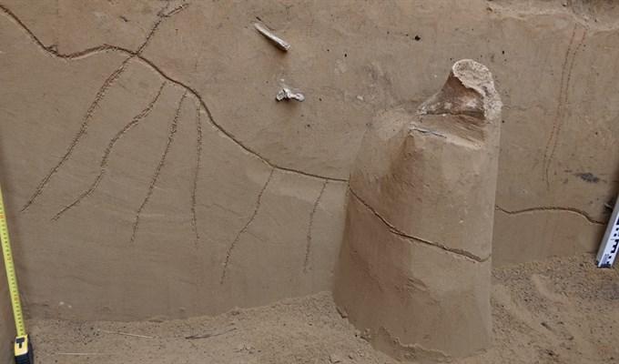 фото Томские палеонтологи нашли культовый предмет на знаменитом «волчьем кладбище» 4