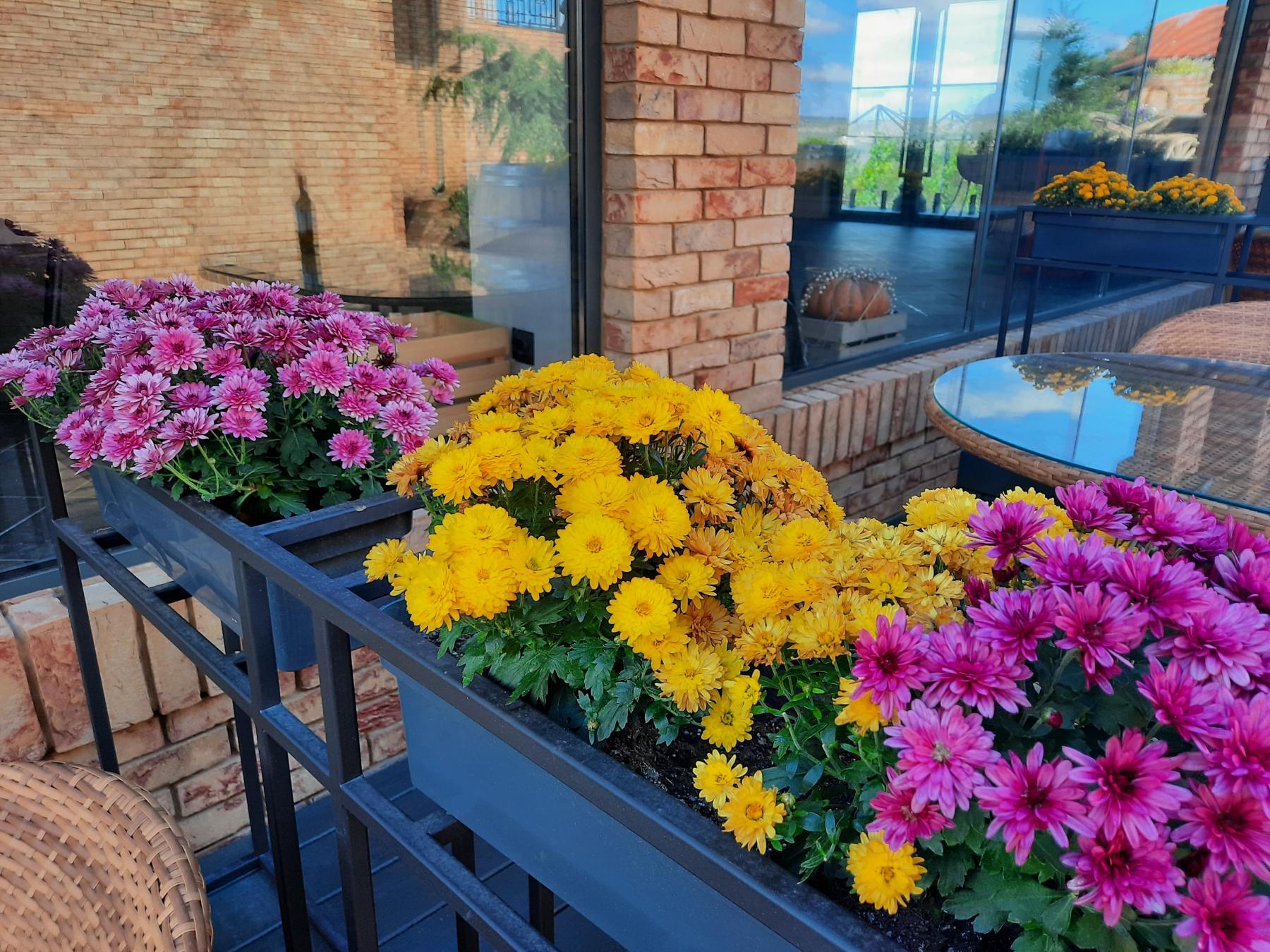 фото Аллергия на весну: как живут люди с реакцией на цветение 2